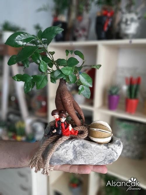 Bonsai Küçük Kaya