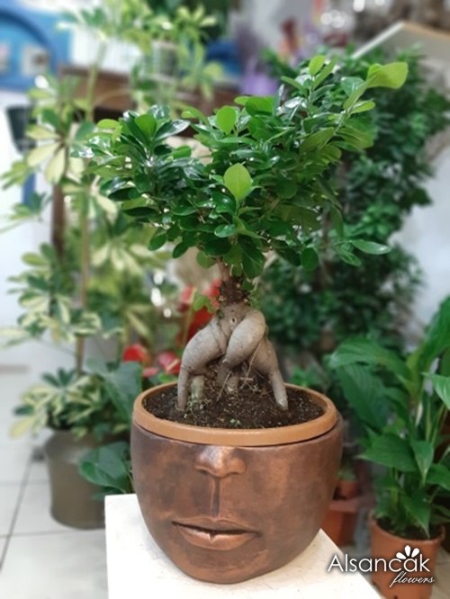 Rodin Figür Bonsai