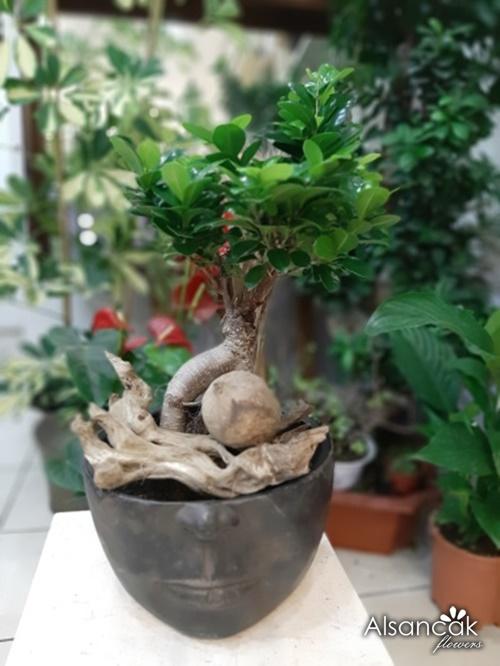 Rodin Bonsai Gri