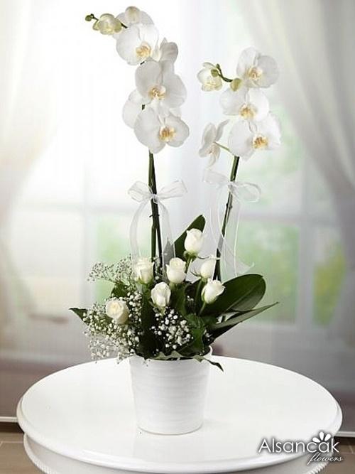 Çift Dal Orkide ve Güller