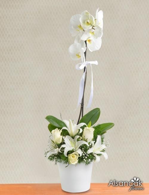 Tek dal orkide ve güller
