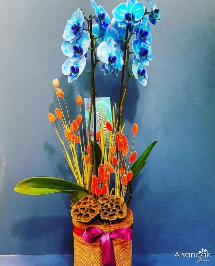 Orkide Mavi