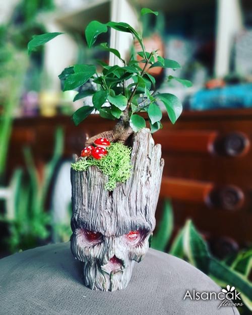 Korkunç Groot Bonsai